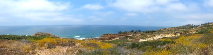 42 Torrey Pines Panoramic Shot Nature Photography