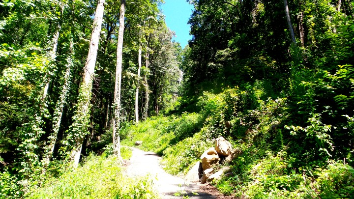 14 Amicalola Falls.jpg