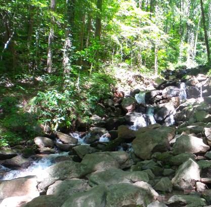15 Amicalola Falls
