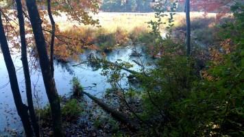 10 Sakowich Reservation Swamp