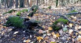 14 Deer Jump Reservation Woods