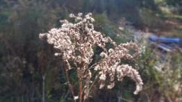 15 Deer Jump Reservation Flower