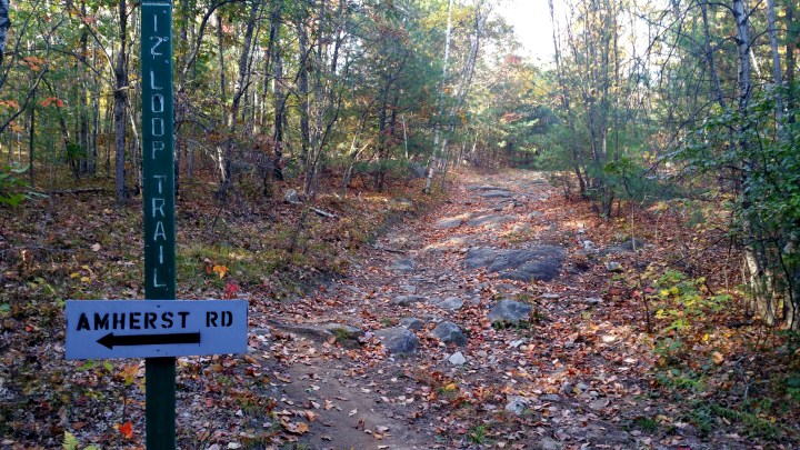 15 Horse Hill Nature Preserve Turning Off the Loop Trail.jpg