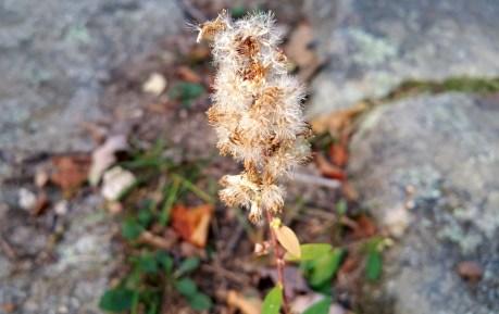 17 Horse Hill Nature Preserve Flora