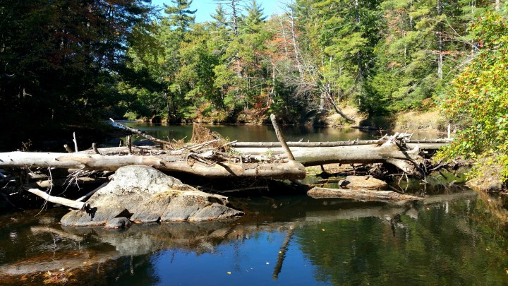 17 Wildcat Falls Rocks and Fallen Trees.jpg