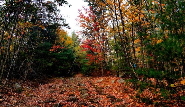 21 Horse Hill Nature Preserve Fall Colors