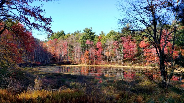 29 Wildcat Falls Fall Colours Swamp