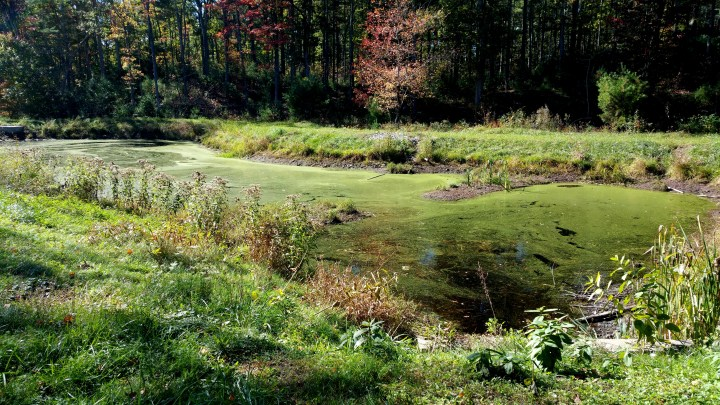 3 Wildcat Falls Algae Swamp.jpg