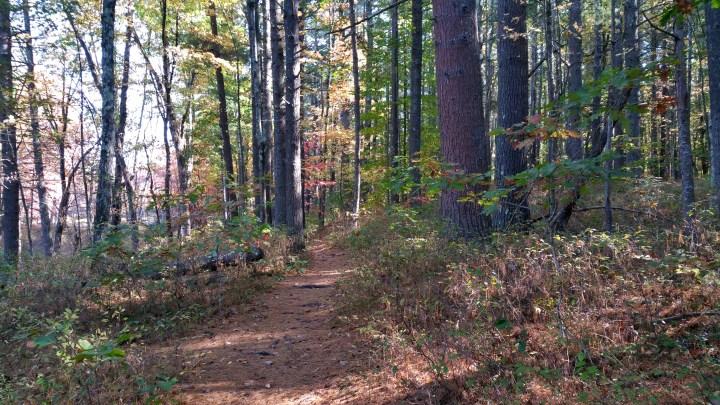 30 Wildcat Falls Woodsy Trails NH.jpg
