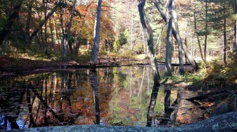 4 Bakers Meadow Reservation Swamp