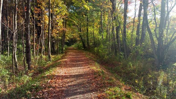 4 Horse Hill Nature Preserve Hiking Trail.jpg