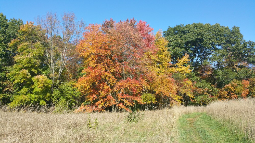 4 West Meadow Reservation