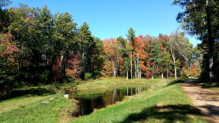 4 Wildcat Falls Small Pond.jpg
