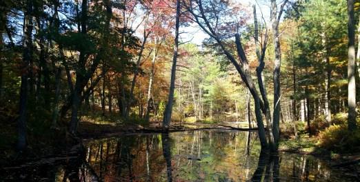 5 Sakowich Reservation Massachusetts