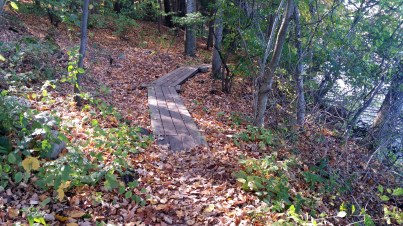 6 Deer Jump Reservation Fall Leaves