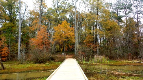 20 Constitution Lakes Hiking in Atlanta
