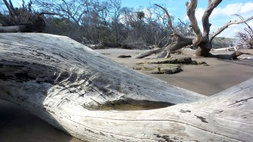 1 Blackrock Beach White Driftwood Hike