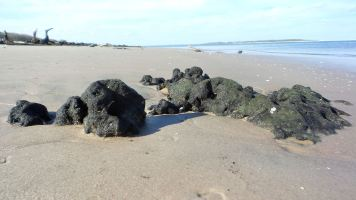 10 Blackrock Beach Green Algae Black Rocks