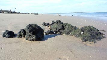 10 Blackrock Beach Green Algae Black Rocks