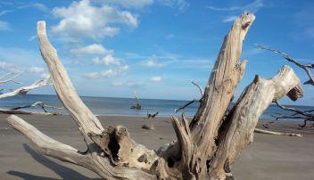 11 Blackrock Beach White Driftwood