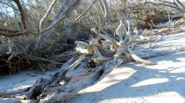 19 Blackrock Beach White Driftwood Gnarled Trees