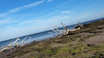 2 Blackrock Beach Green Algae White Driftwood
