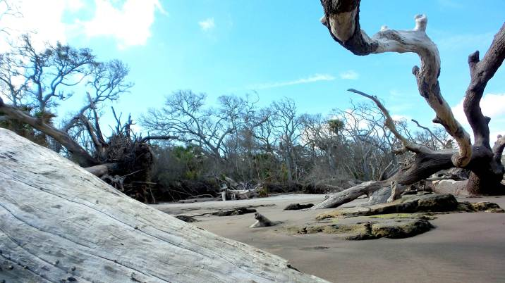 2 Blackrock Beach White Driftwood Hiking