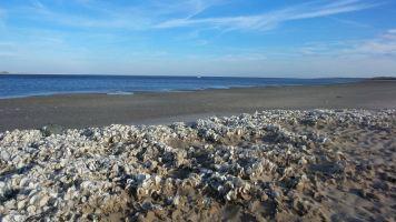 25 Graveyard of Shells at Blackrock Beach