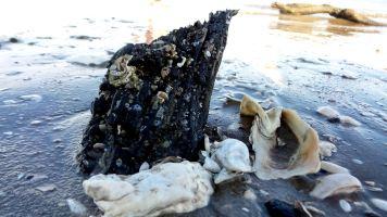30 Blackrock Beach White Driftwood Trees and Shells