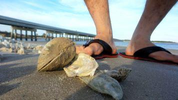31 Blackrock Beach Seashell Collection