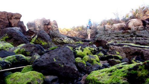 35 Blackrock Beach Green Algae Winston Murray