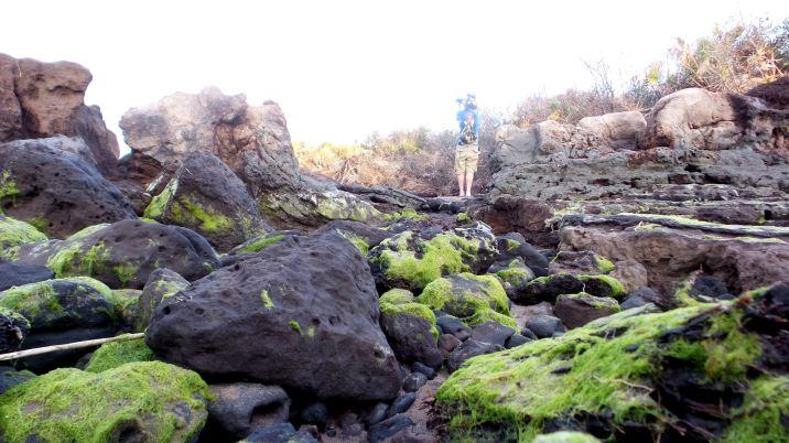 36 Blackrock Beach Green Algae Winston Murray