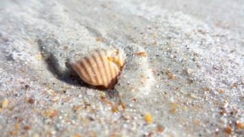 5 Anastasia State Beach Park Shells