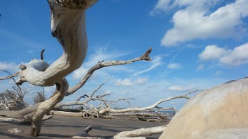 5 Big Talbot Island Blackrock Beach White Driftwood