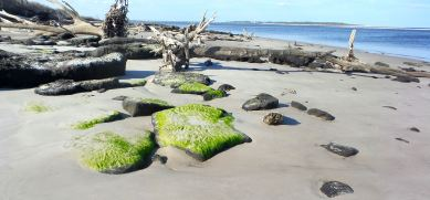 8 Blackrock Beach Green Algae White Driftwood