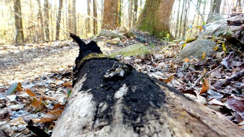 29 Dead Tree Cascade Springs Nature Preserve