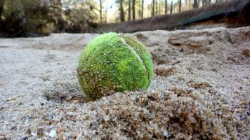 33 Tennis Ball Cascade Springs Nature Preserve