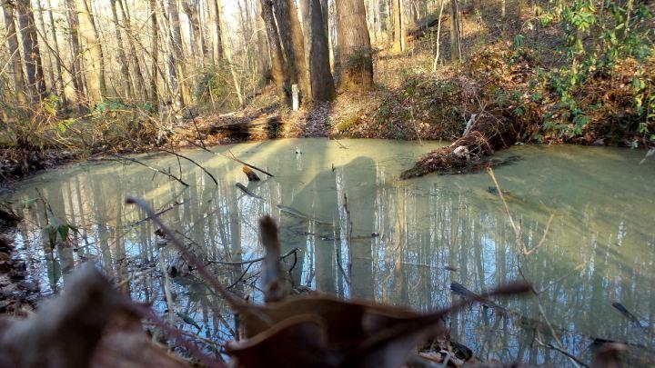 42 Cascade Springs Nature Preserve Swamp.jpg