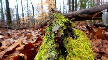5 East Palisades Moss