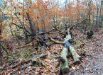 7 East Palisades Felled Trees