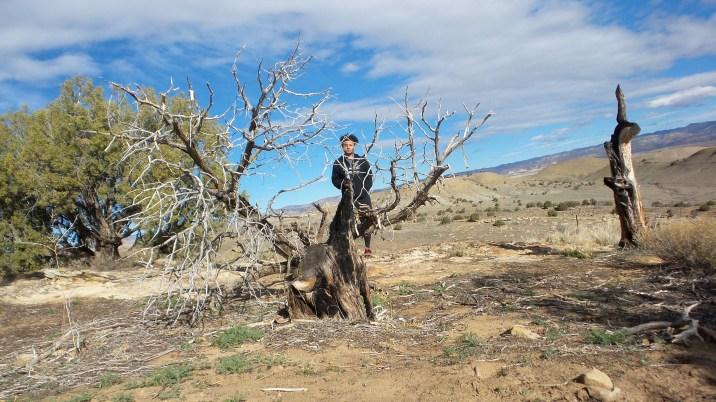 14 Thompson Viewing Area Utah Tree Tristan O'Bryan