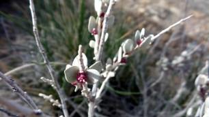 23 Thompson Viewing Area Utah Desert Flower