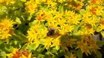 10 Jensen Olson Arboretum Alaska Flowers Busy Bee