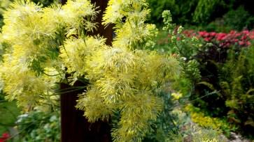 12 Jensen Olson Arboretum Alaska Flowers