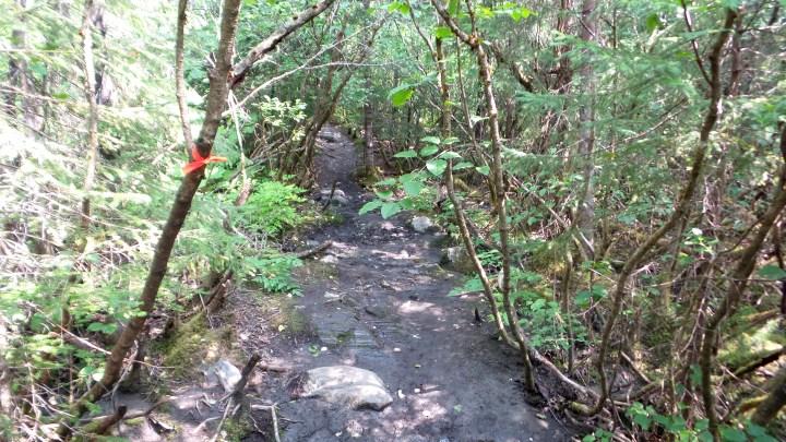 30 West Glacier Trail Juneau Alaska Trail Markers.jpg