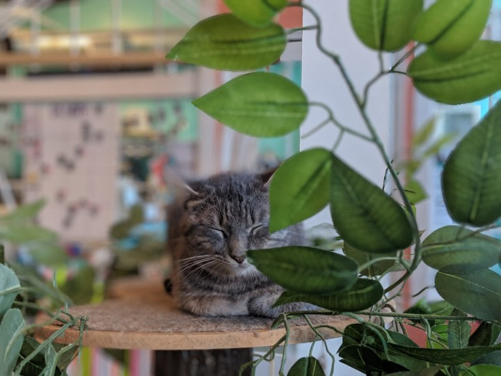 Things to Do in Atlanta: Enjoy Cats and Coffee at the Happy Tabby Cat Cafe