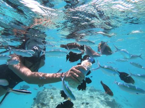 Alexis-Chateau-Snorkelling-Fish-Feeding-Maldives-26
