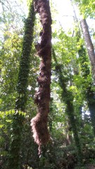 hiking trail nature travel