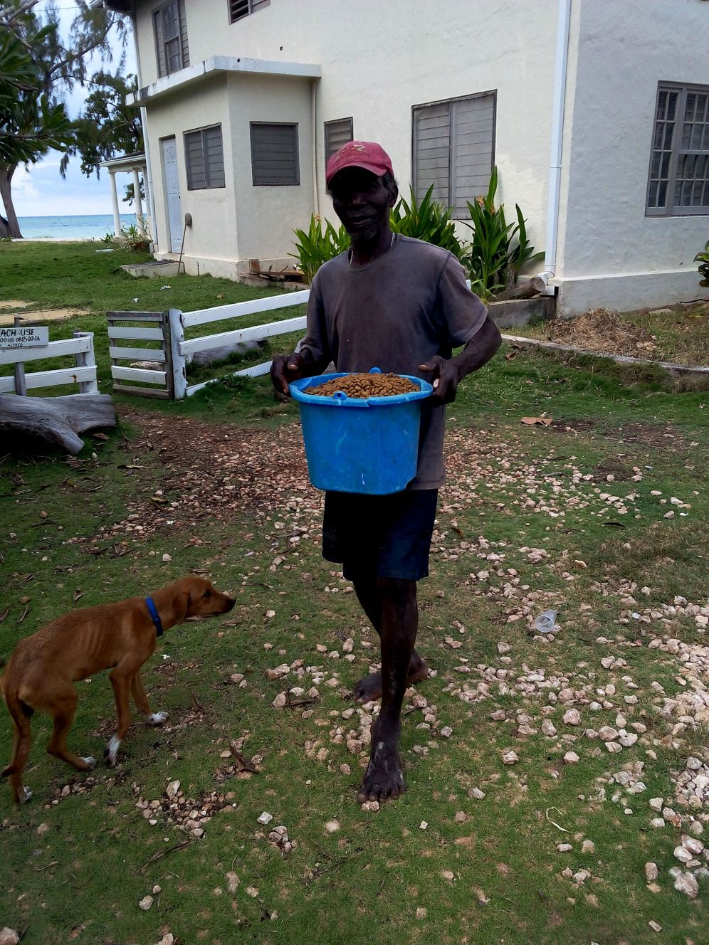 dog food animals stray travel jamaica
