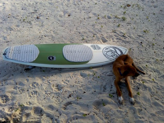 dog surboard beach jamaica travel